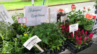 Belmont Garden Club Annual Plant Sale