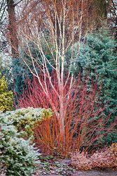 Magic of the Winter Garden