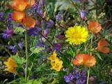 Gardening with Native Plants: It Matters.