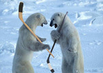 Polarbearhockey