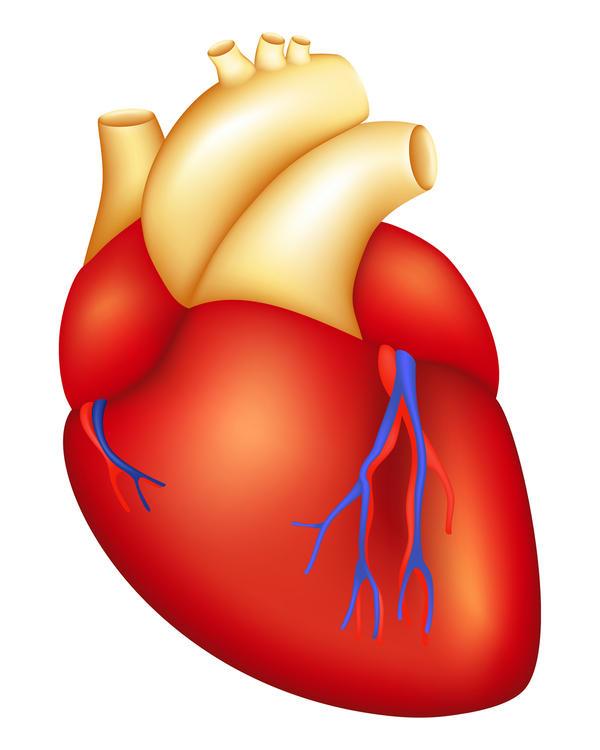 The human body lessons tes teach pvc heartpvc plastic pvc toxic longcheng pvc site part 5 ccuart Image collections