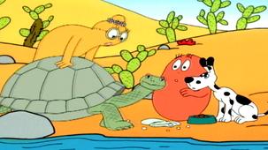 Vidéo - Les Galapagos : Les tortues géantes