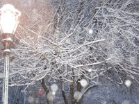 Winter Park Scene Tree with Snow and Streetlight