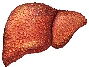 Hepatitis Virus Shell May Improve Cancer Treatment