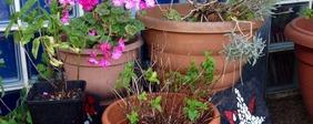 Plants_rose_bowl
