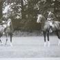 JACK BRYANT AT THE ARAB HORSE SOCIETY SHOW, KEMPTON PARK