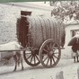 buffalo cart (2)