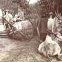 buffalo cart (3)
