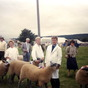 Showing Sheep at Burwarton