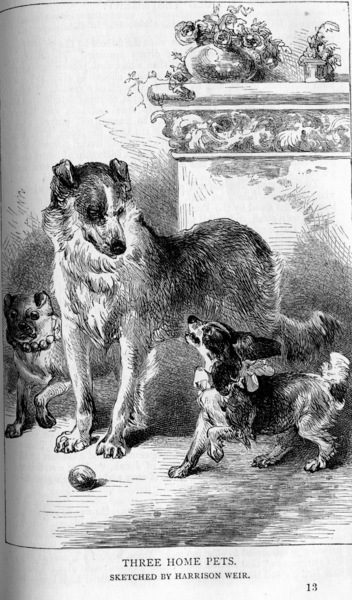 Harrison Weir Sketch, Three Home Pets