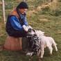Brian_and_lambs