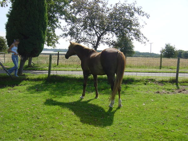 Horse waiting for a titbit