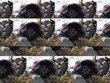 Yeah so I'm a turkey so what   photo