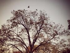 Four Poems photo