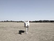 Lone Horse Running photo
