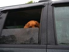 Raindance photo
