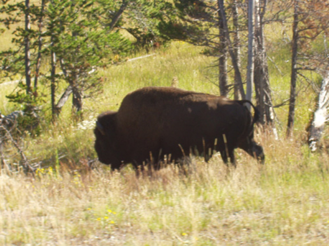 BISON cover letter PRIZE winner photo