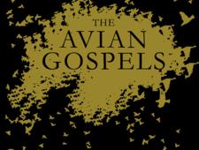 The Avian Gospels book trailer photo