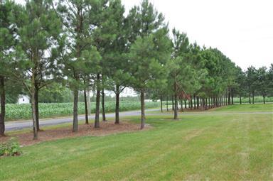 7250 Mennonite Church Road Photo #24