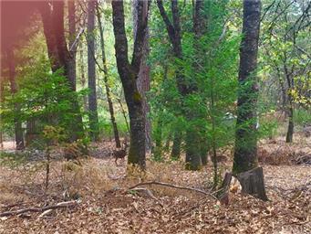 10764 Rosa Trail Photo #36