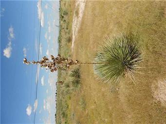 15290 Cactus Flower Photo #19