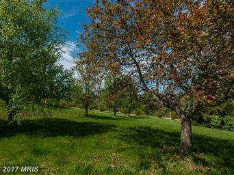 270 Shadow Valley Farm Lane Photo #25