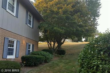 1454 Park Terrace Drive Photo #20