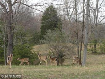 66 Tecumseh Trail Photo #30