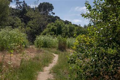 131 Hacienda Carmel Photo #31