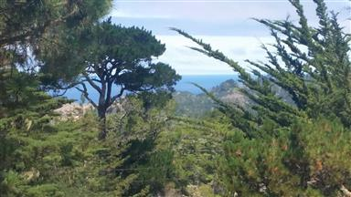 126 Cypress Way Photo #5