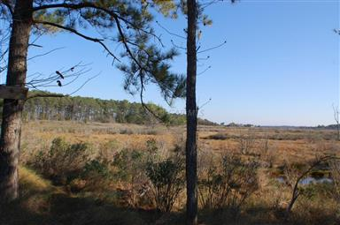 27770 Crisfield Marion Road Photo #19