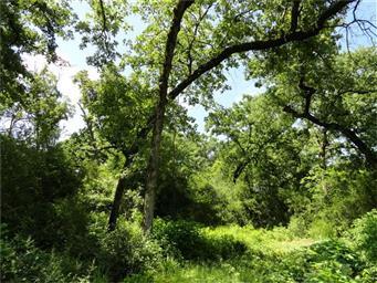 12637 136 Creek Photo #19