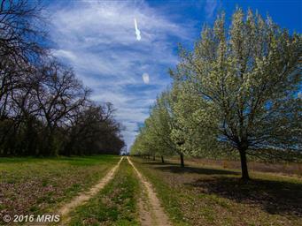 135 Bright Meadow Lane Photo #29