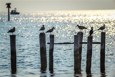 8407 Fishing Island Road Photo #34