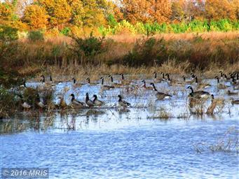 5793 Quaker Neck Landing Road Photo #27