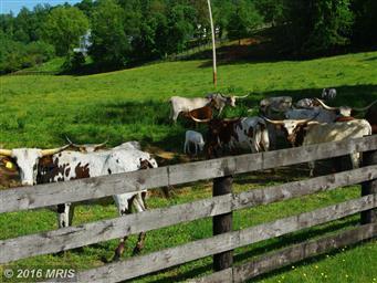 1001 Quaker Run Road Photo #13