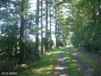 4467 Pine Top Road Photo #18