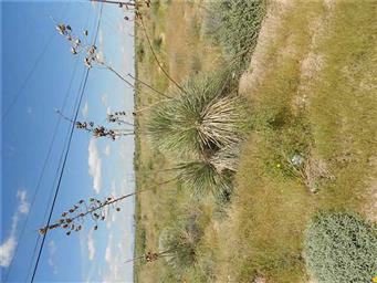 15290 Cactus Flower Photo #20