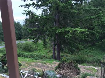 5 Pine Court Photo #33