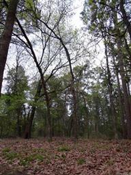 605 Greenbriar Trail Photo #18