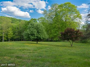 1389 Creek Road Photo #3