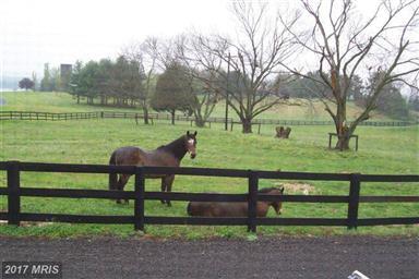 6010 Woodberry Farm Road Photo #22
