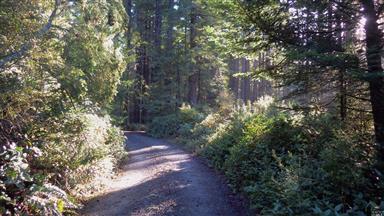 26101 Spruce Lane Photo #6