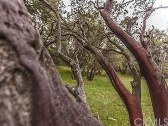 5146 Chowchilla Mtn Road Photo #35
