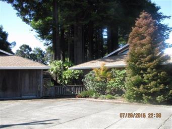 144 Woodland Drive Photo #4