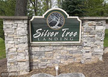 145 Silver Tree Lane Photo #28