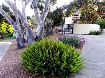 1109 Golden Oaks Lane #1109 Photo #18
