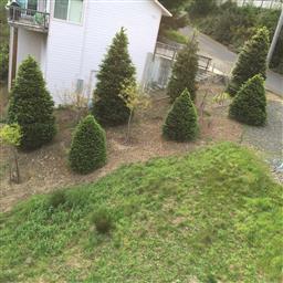 5 Pine Court Photo #34