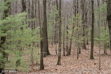 21461 Buck Trail Photo #16