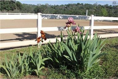 33272 Rancho de Fruta Lane Photo #28